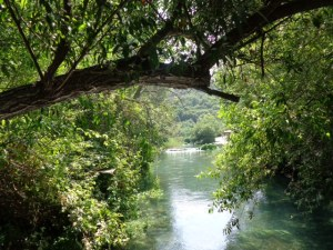 (Photo taken at the Banias spring, Israel, the source of the Jordan River)