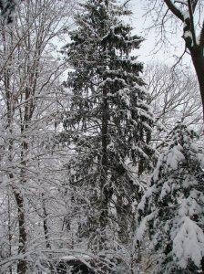 (Photo taken in my backyard in New Haven, CT.)